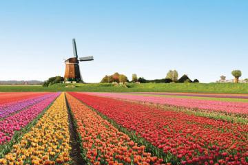 Tham gia Hội hoa Keukenhof 2020 - Hà Lan thông qua Video Online