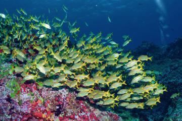 Thiên đường nơi đáy biển tại quần đảo Fernando De Noronha, Brazil
