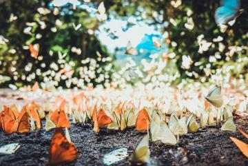 Khung cảnh thần tiên ở vườn quốc gia Nam Cát Tiên mùa bướm rừng