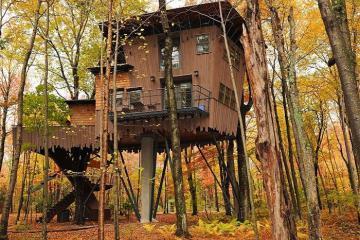 Vào rừng để thấy những khách sạn tuyệt đẹp vắt vẻo trên cây
