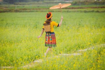 Rủ nhau 'sống ảo' ở vườn hoa làng cổ Đường Lâm Hà Nội khoe sắc thắm