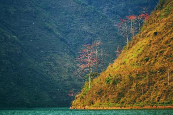 Mộc miên đỏ thắm bên dòng Nho Quế, Hà Giang