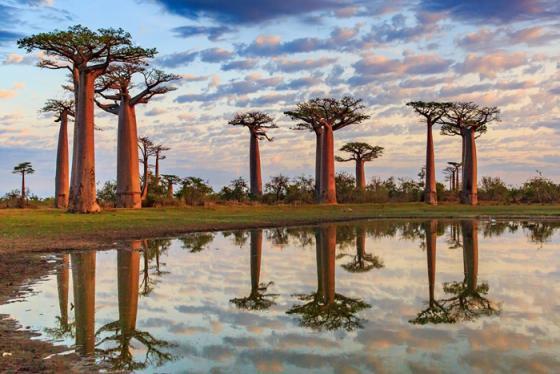 Chiêm ngưỡng các loài cây độc lạ trên thế giới khi chúng còn 'độ xuân'