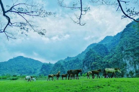 Phiêu diêu về miền thảo nguyên xanh Đồng Lâm tuyệt đẹp ở Lạng Sơn