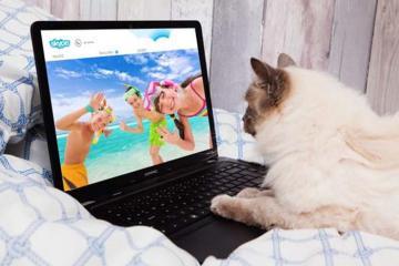 Khách sạn mèo sang trọng nhận trông boss 'bơ vơ' khi sen bận cách ly