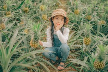 'Săn' hình đẹp lung linh và ăn dứa thả ga ở cánh đồng dứa Bắc Giang
