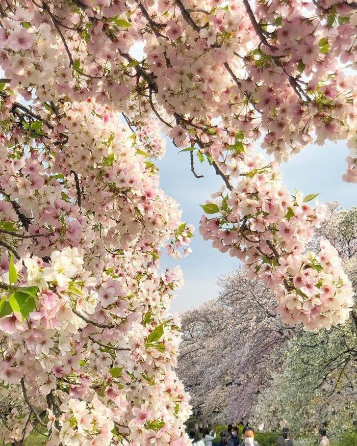 mùa hoa tháng 4