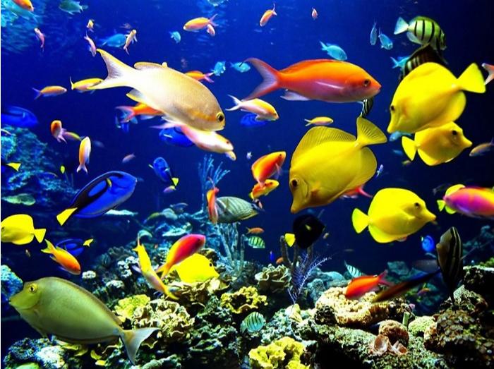 hình ảnh hệ sinh vật biển đa dạng dưới biển Hòn Mun