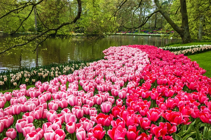 Những vườn hoa đẹp nhất thế giới ru ta vào chốn mộng mơ