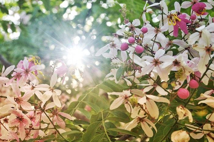mùa hoa ở huế tháng 6