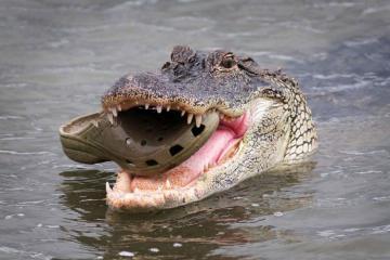 10 loài vật nguy hiểm bạn nên tránh xa trong chuyến du lịch Australia (p2)