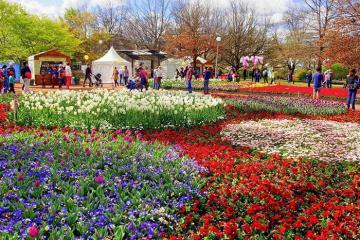 Lãng du mùa xuân nước Úc - ngập trong sắc hoa rực rỡ