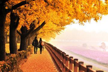 Gợi ý 10 điểm chụp ảnh đẹp ở Hàn Quốc vào mùa thu