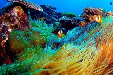 Những điểm ngắm san hô đẹp nhất Australia