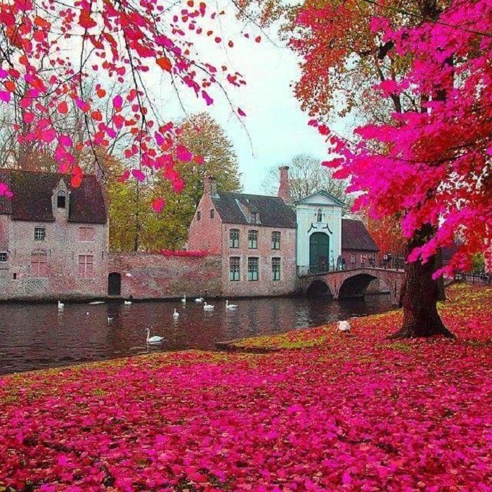 mùa thu trên thế giới ở Bruges