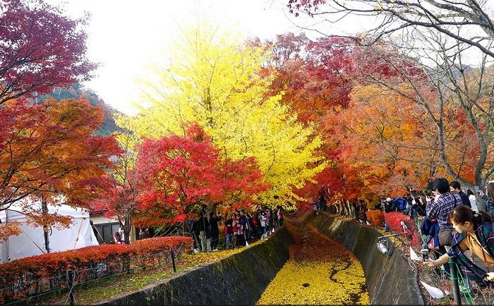 lễ hội mùa thu Nhật Bản