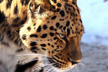 Nơi tuyệt nhất để chiêm ngưỡng hệ động vật hoang dã Mexico