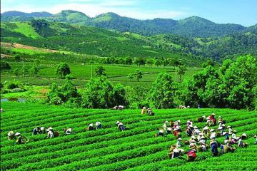 Những điểm du lịch hút khách ở Thái Nguyên