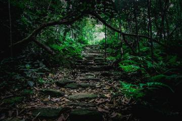 Vườn quốc gia Tam Đảo – khu rừng sinh thái lớn nhất Miền Bắc