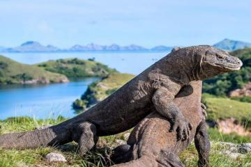 Khám phá những bí ẩn ở đảo rồng Komodo trước khi bị đóng cửa
