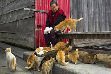 Đảo mèo Aoshima ở Nhật Bản - thiên đường của những người yêu động vật