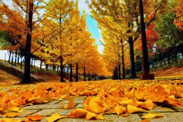 Thu tới, đừng quên check-in những điểm ngắm lá vàng rơi ở Hàn Quốc