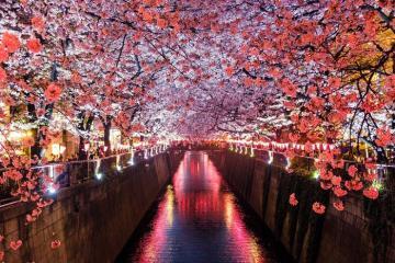 Khám phá thị trấn Meguro, khu dân cư sành điệu nhất của Tokyo