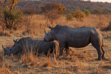 Du lịch Nam Phi - vừa hoang dã vừa hiện đại (Phần 1)