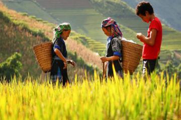 Du lịch Hà Giang tháng 10 tuyệt đẹp qua lời kể của người H'mong