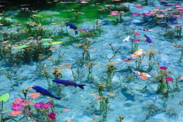 Ngắm hồ nước đẹp như tranh vẽ ở Nhật Bản