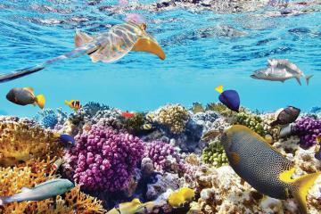 Cù Lao Chàm - Thiên đường cho chuyến du lịch dưới đáy biển