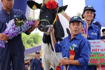 Lễ hội hoa hậu bò sữa Mộc Châu tháng 10 có gì đặc sắc?