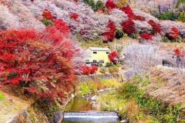 Những lễ hội mùa thu Nhật Bản đặc sắc