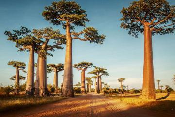Quốc đảo Madagascar và những điều có lẽ bạn chưa biết