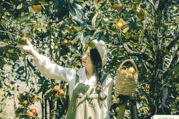 Mùa hồng chín ở Đà Lạt và loạt tọa độ sống ảo cho 10X