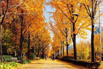 Nhớ mùa thu Seoul!