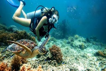 Snorkeling và Diving lặn ngắm san hô có gì khác nhau?