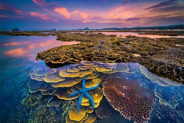 Kinh nghiệm du lịch Hòn Yến, ngắm san hô trên cạn ở Phú Yên