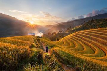 Có một thung lũng lúa vàng Sapa đẹp đến nao lòng