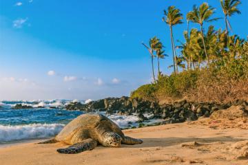 Hawaii được xếp hạng là tiểu bang hạnh phúc nhất nước Mỹ