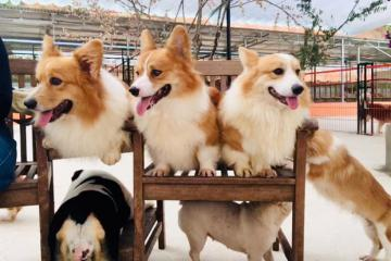 Trại cún Puppy Farm Đà Lạt - chốn lui tới của những tín đồ mê thú cưng