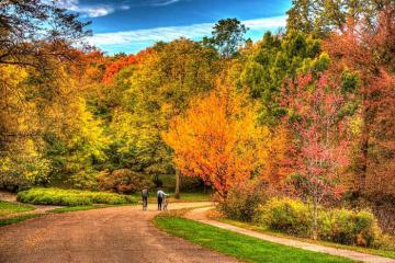 Boston mùa thu và những nẻo đường ngập tràn lá vàng, lá đỏ