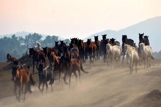Trại ngựa Bá Vân đẹp như thảo nguyên Mông Cổ ở Thái Nguyên