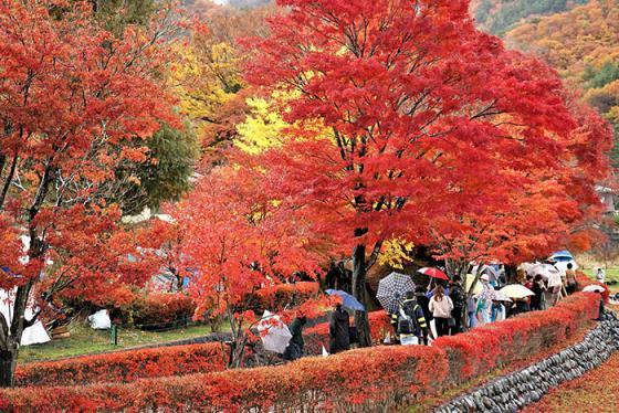 Đi đâu để ngắm rừng phong lá đỏ khi du lịch Nhật Bản vào mùa thu?