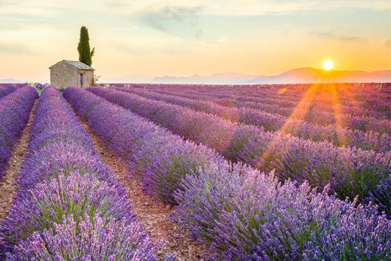 Đến Provence tháng 9, khám phá cánh đồng hoa lavender tuyệt đẹp