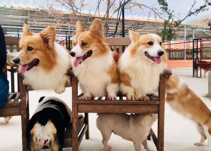 Image result for nông trại cún puppy farm