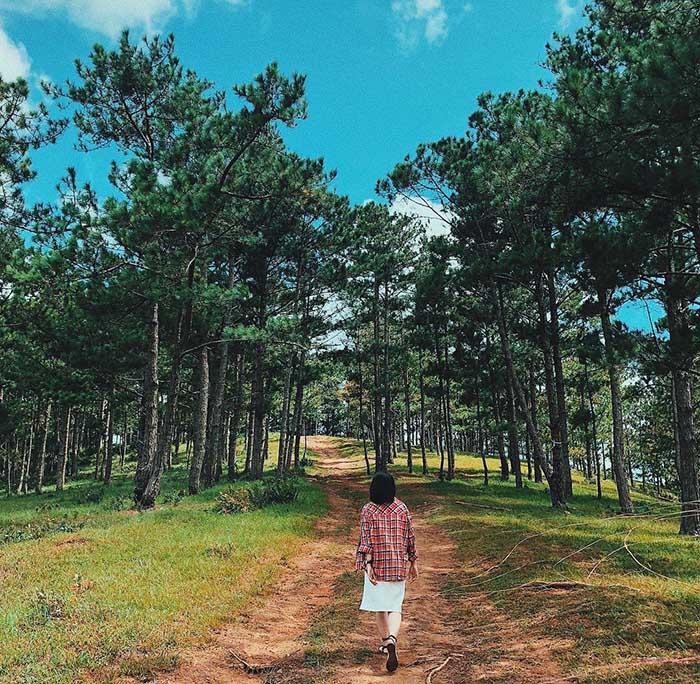 Con đường đất dẫn lên rừng thông thơ mộng