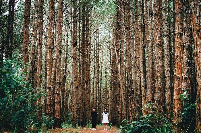 Con đường mòn dẫn vào sâu trong rừng