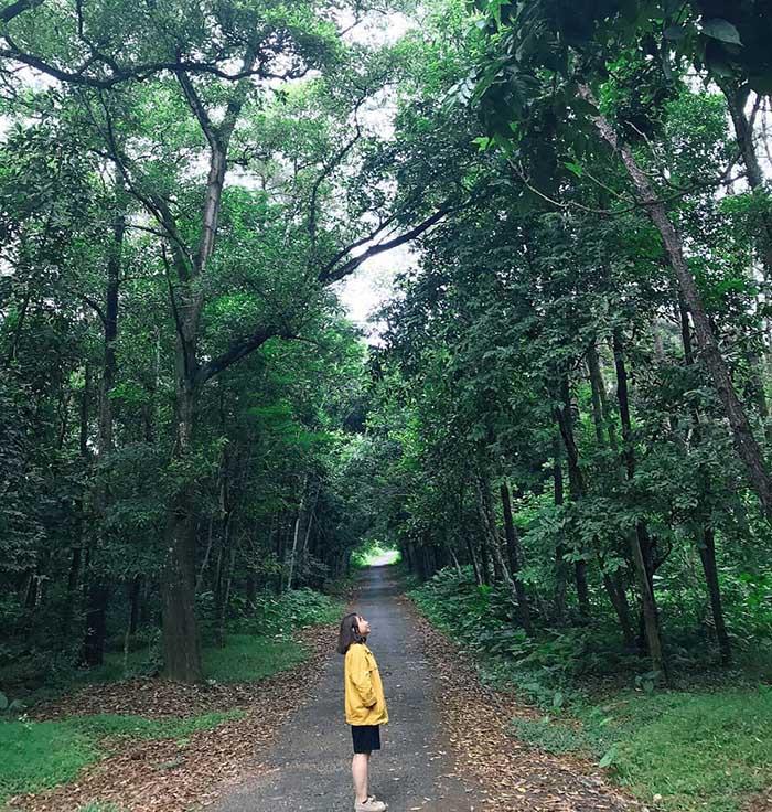 Rừng thông hai bên đường nhựa đẹp tựa Hàn Quốc