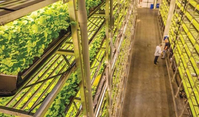 Bên trong nông trại cung cấp thực phẩm cho hãng bay tốt nhất thế giới